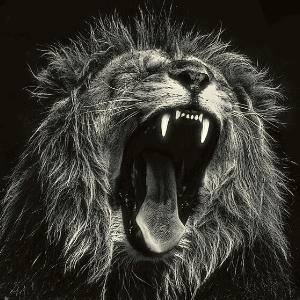 roaring lion representing Satan on the earth